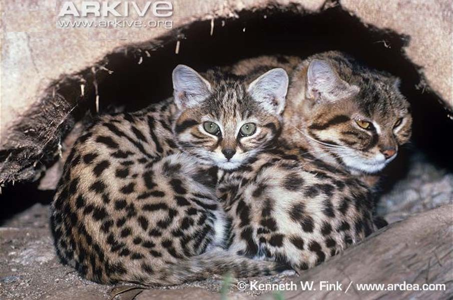 "grote"" katten-weetjes (3) | stichting spots"